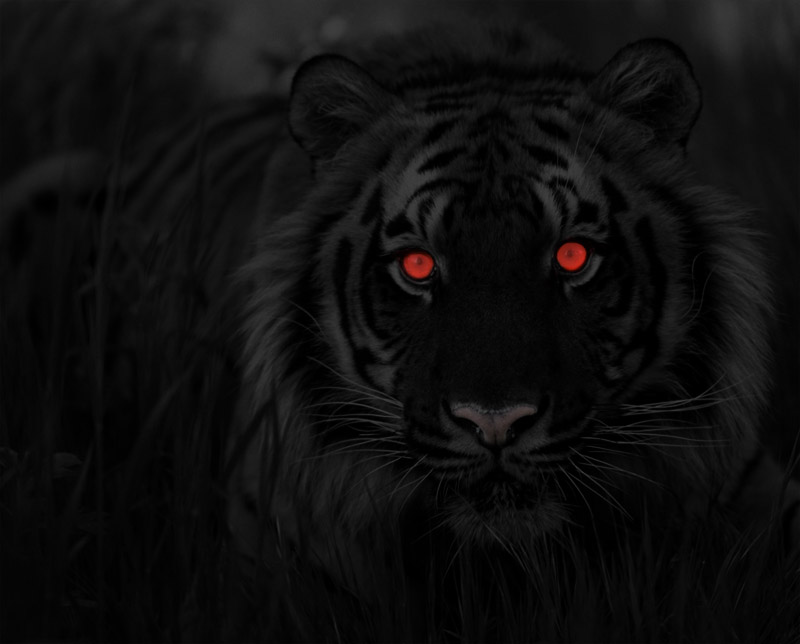 black_tiger_by_gargolmedo-d33jkty